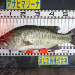 細川 様 60.0㎝/3150g (晴)