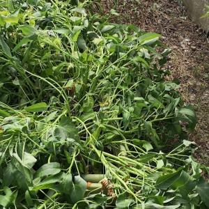 真夏にプランターで野菜育てるのは大変