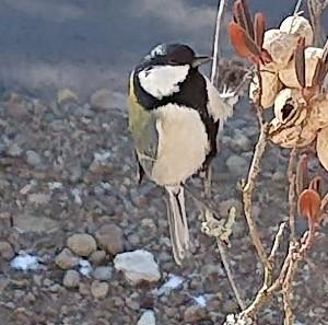 大寒の朝~凍る窓、歌う鳥