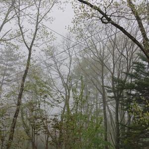 霧は突然!&どうしても言いたいこと