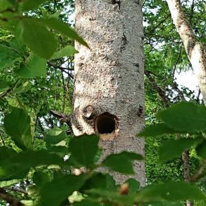 巣穴から顔を出したのは…