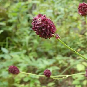 野の花の名前