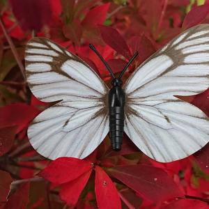 信州エコ大賞と蝶の世界