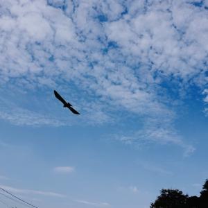 里山で秋らしい風景と野鳥を撮影