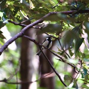 七沢森林公園で探鳥してみた