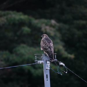 連休は風が強くて野鳥観察には厳しかった