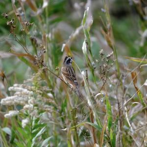 足を止めて野鳥観察をしたら驚くほど鳴き声が増えて、見えていなかった野鳥が顔を出してくれました