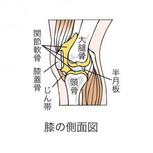 LiLiCo 膝蓋骨骨折
