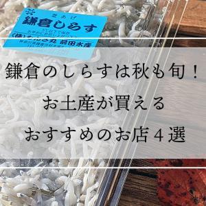 鎌倉のしらすは秋も旬!お土産が買えるおすすめのお店4選