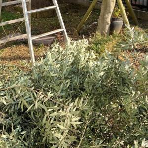 冬の庭仕事