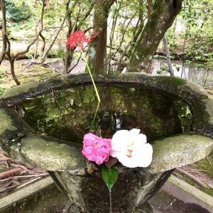 【京都・法然院】隠れ家的な癒やしの空間!白砂壇と手水鉢がとても素敵!