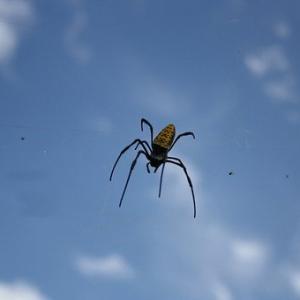 蜘蛛は殺さないほうがいいと聞くけれど、、、