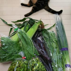 七飯町の「ふるさと直売所」~旬の野菜が種類豊富で安価です