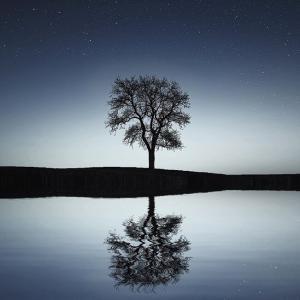 人間存在における「意識の進化」の段階