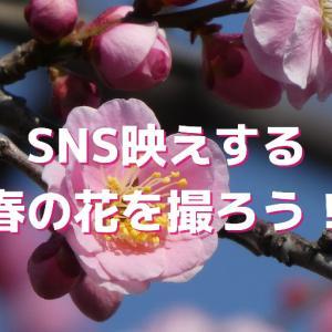 【梅と桜】SNS映えする映像を撮る手順5つ
