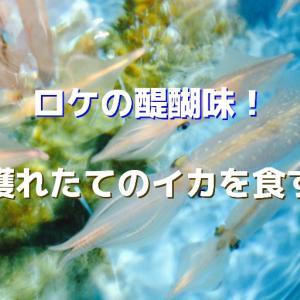 釣りロケの醍醐味! イカの本当の味リポート