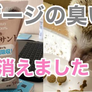 ハリネズミのフンが臭い?!アパート暮らしでハリネズミを飼う時の匂い対策