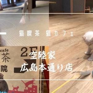 広島市の猫カフェなら「空陸家」で満喫しませんか?駅から徒歩1分の所にあるんですよ。
