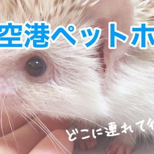 ハリネズミ・ウサギを大田区の「羽田空港ペットホテル」で預ける事ができます!羽田空港から車で5分のペットホテル