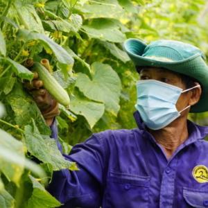 ベトナム 完全にワクチン接種された人々が農産物生産と配達を許可