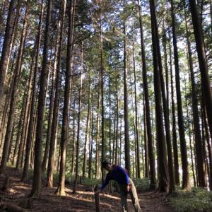 紀見峠から金剛山ハイキング