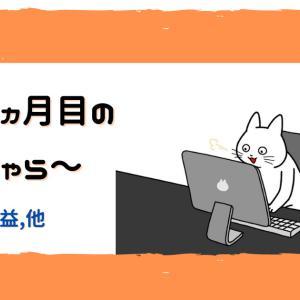 【雑記ブログ開設6か月突破】運営報告【PV他】