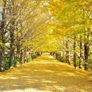 国営昭和記念公園の観光