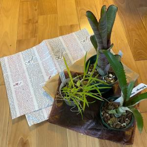 植物好きの引越し