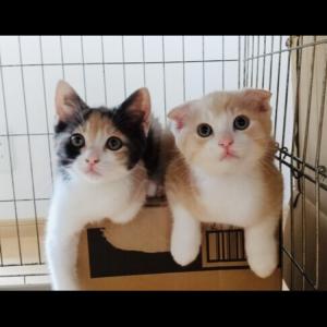 保護猫二匹の里親となった感想と実体験。大げさですが猫を飼って人生が変わりました。