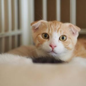 猫のケージ必要か否か。メリット、デメリットについて解説