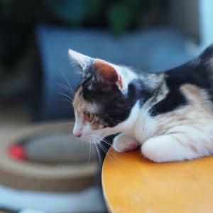 猫のトイレの種類と特徴コストを解説。愛猫と飼い主様に合うタイプを選択しよう。