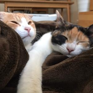 猫のトイレ砂の種類と特徴を知りたい!メリット、デメリットとは?