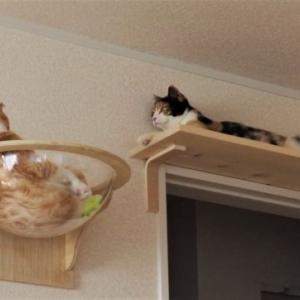 猫の井戸端会議
