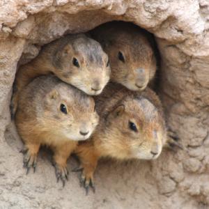 同じ穴のムジナ。DBで穴掘りしてると仲間が集まる