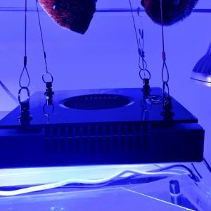 ラディオンG5Blueを使っての水槽の変化