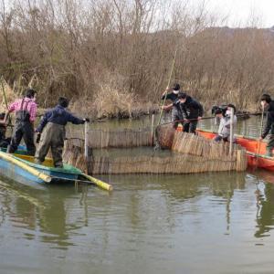 1月17日 柴揚げ漁・マブナ釣り・タナゴ釣り