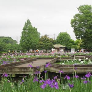 地元の花菖蒲園に行ってみた。【山崎公園】
