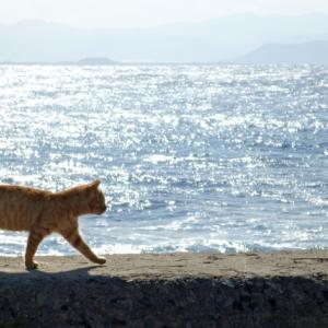 猫が家の中を歩き回る理由。猫のパトロールと心を開いたサイン、注意点とは?