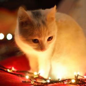 猫の冬の過ごし方。猫にとって快適な室温と寒さ対策とあったかグッズ5選