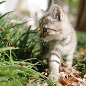【匂いも負担もストレスも軽減】オススメ猫用システムトイレ