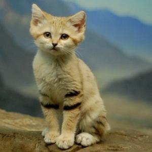 珍しい猫。可愛いスナネコの赤ちゃんが見られる動物園をご紹介♪