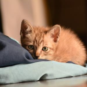 初めて猫を飼うとき。飼う前には必ず同居家族全員の同意を得よう。