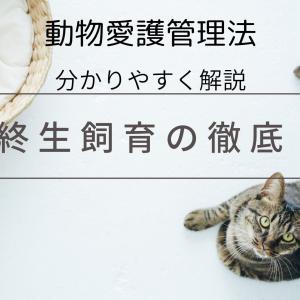 猫を飼う前に確認すべきこと~動物愛護管理法~終生飼育の徹底