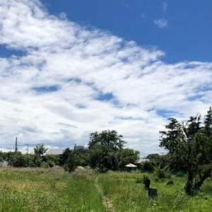 神奈川県横浜市にある いずみ野ドッグラン