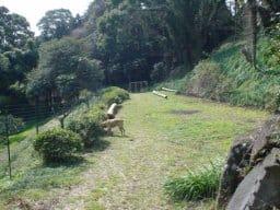 神奈川県真鶴町にある 松本農園