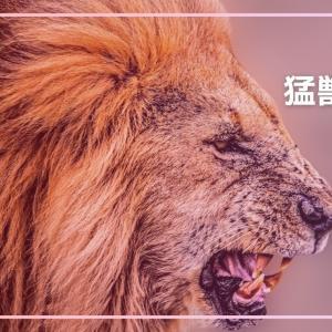 【夢占い】猛獣の夢の意味13選!襲われる・追われる出てくるetc