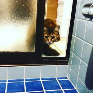 覗き魔cat