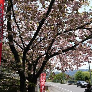 【城】小川城:群馬県みなかみ町の自然が美しい波乱ある歴史の城
