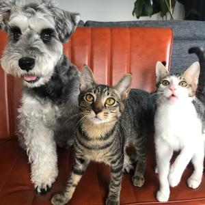 「犬猫多頭飼い」ブログ村用オリジナルバナーを作ってみました!