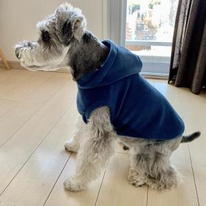 服が苦手な犬の服選びのポイントとは?